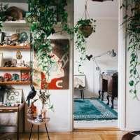 Houseplants 70's Stylee